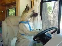 運転手コディオ