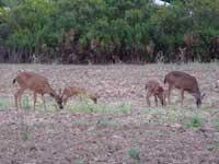鹿の親子も仲良し親子