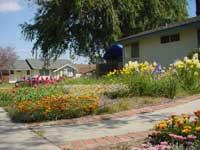 きにょママの庭