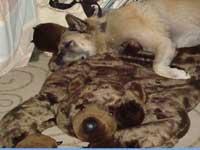 ライバル?のクマちゃんと寝るコディオ