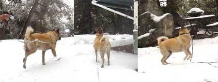 雪の好きなコディオは大喜び